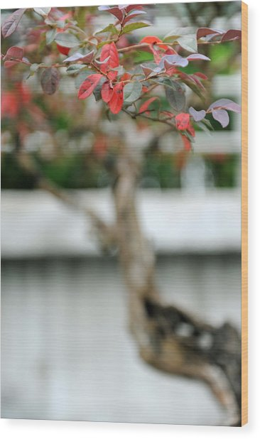 Bonsai Wood Print by Jessica Rose