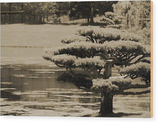 Bonsai Tree Near Pond In Sepia Wood Print