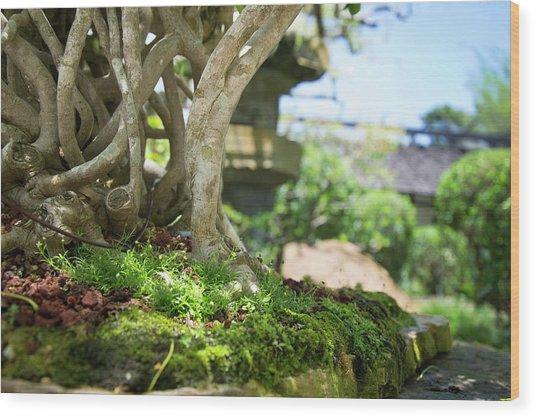 Bonsai View Wood Print