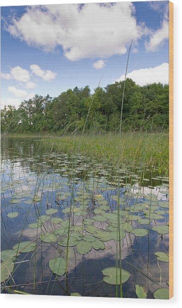 Borden Lake Lily Pads Wood Print