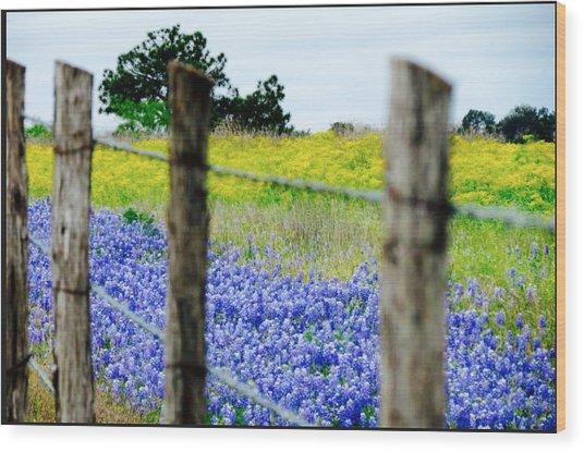 Border Blue Wood Print