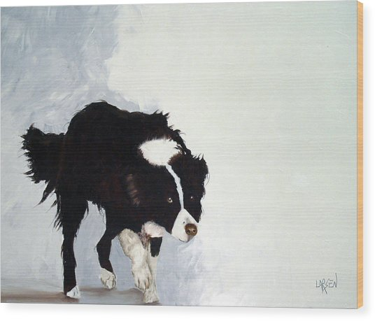 Border Collie Wood Print by Dick Larsen
