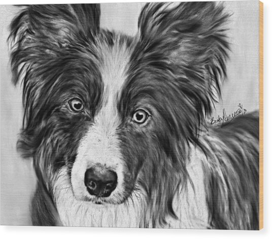 Border Collie Stare Wood Print