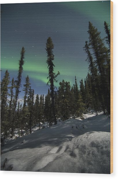 Boreal Forest Essence Wood Print