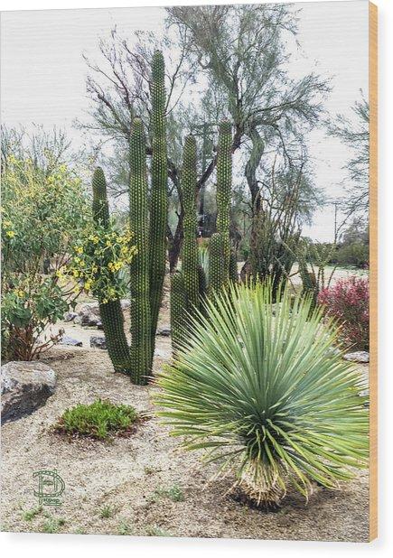 Borrego Botanical Garden Wood Print