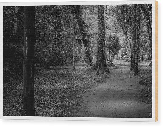 Bosque Do Silencio-campos Do Jordao-sp Wood Print