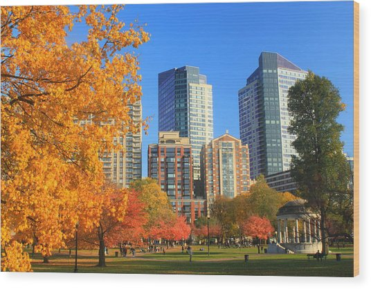 Boston Common In Autumn Wood Print