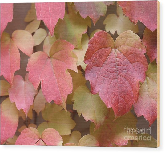 Boston Ivy Turning Wood Print