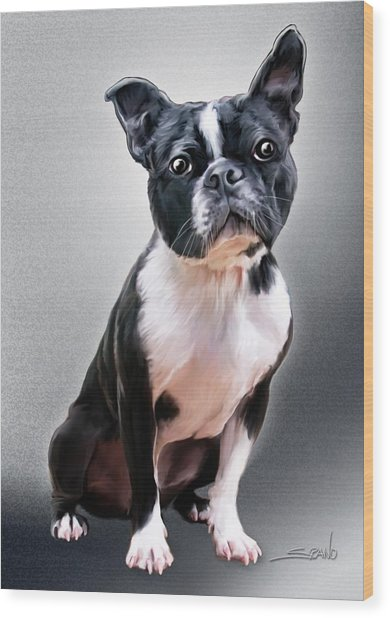 Boston Terrier By Spano Wood Print