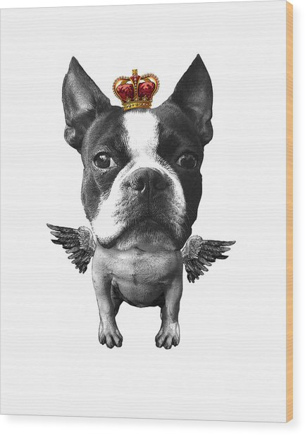 Boston Terrier, The King Wood Print