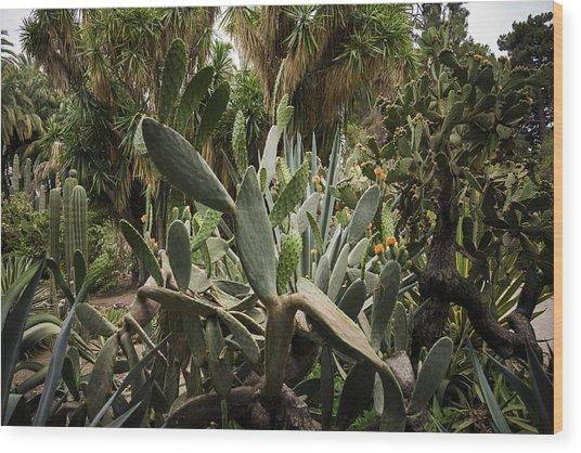 Botanic Garden Valencia Wood Print