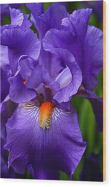 Botanical Beauty In Purple Wood Print