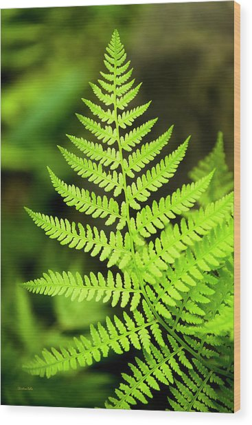 Botanical Fern Wood Print