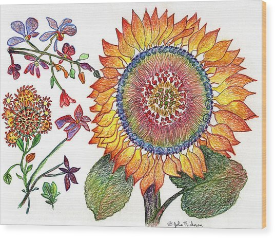 Botanical Flower-46 Sunflower Drawing Wood Print by Julie Richman