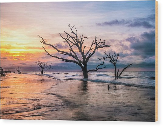 Botany Bay Dawn Wood Print