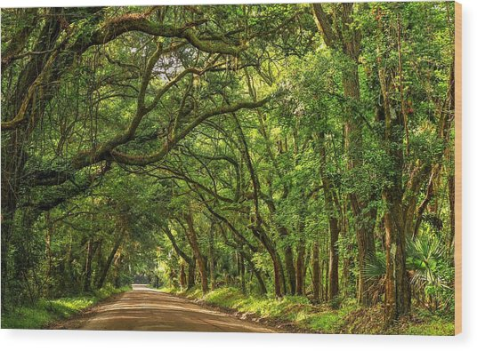 Botany Bay Edisto Island South Carolina Road Light And Shadow Wood Print