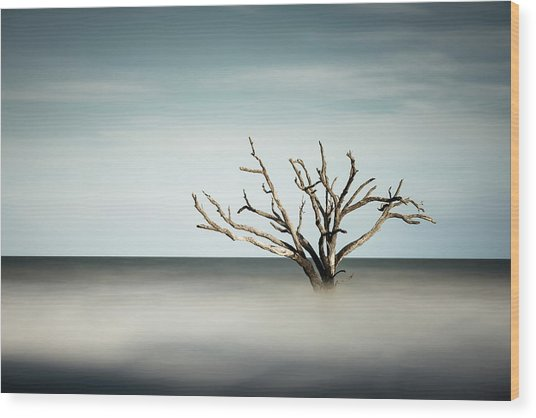 Botany Bay Wood Print