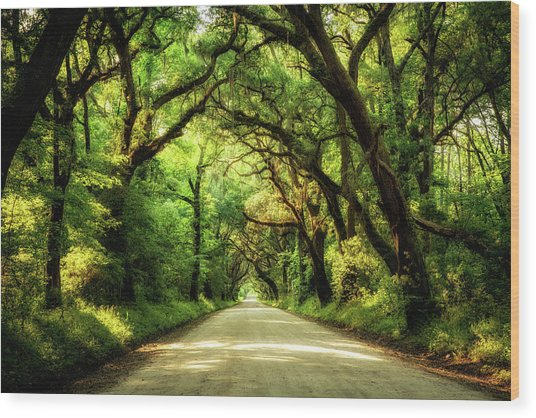 Botany Bay Road Wood Print