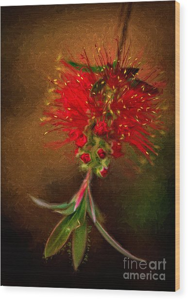 Bottle Brush Flower Wood Print