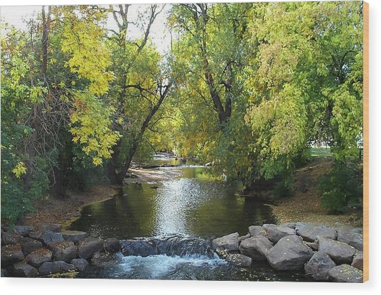Boulder Creek Tumbling Through Early Fall Foliage Wood Print
