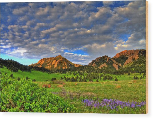 Boulder Spring Wildflowers Wood Print