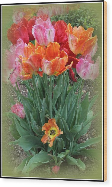 Bouquet Of Colorful Tulips Wood Print