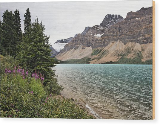 Bow Lake Scenic With The Crawfoot Glacier Wood Print by George Oze