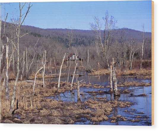 Boxely Swamp2 Wood Print by Curtis J Neeley Jr
