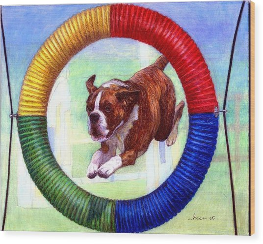 Boxer Dog Agility Class Wood Print by Olde Time  Mercantile