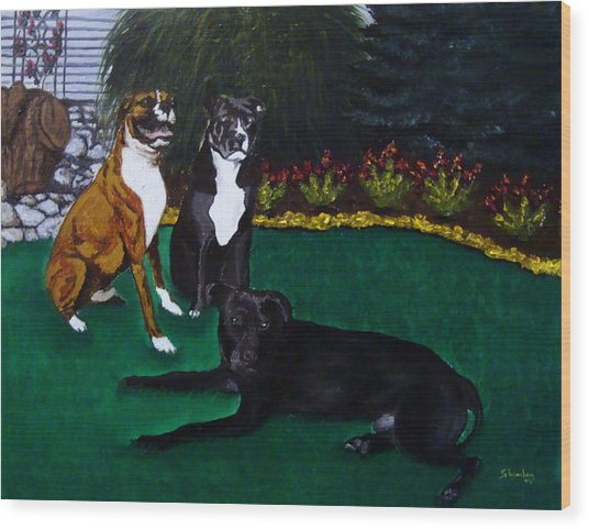 Boxer Pitbull Mix Wood Print by Amanda Schambon