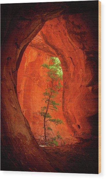 Boynton Canyon 04-343 Wood Print