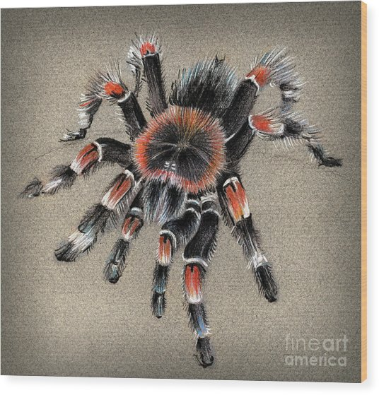 Brachypelma Smithi  Mexican Red Knee Tarantula Wood Print