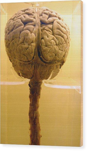 Brain Drain Wood Print by Jez C Self