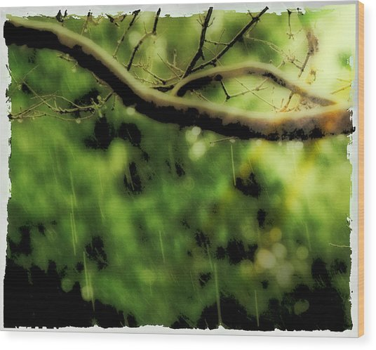 Branch In The Rain Wood Print by Ken Gimmi