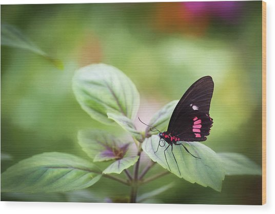 Wood Print featuring the photograph Brave Butterfly  by Cindy Lark Hartman