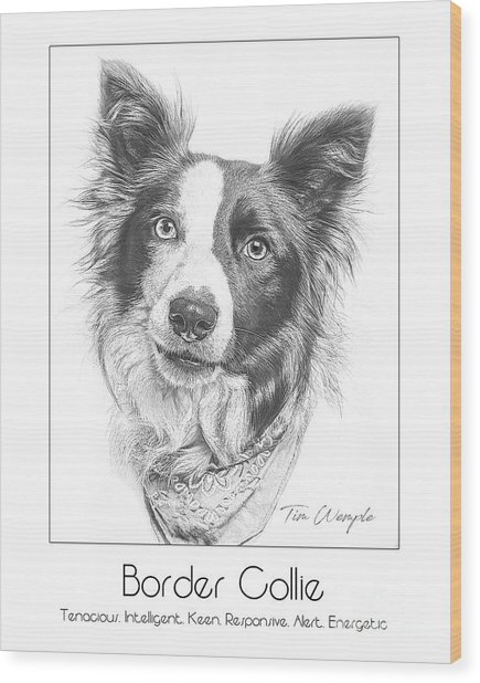 Breed Poster Border Collie Wood Print by Tim Wemple