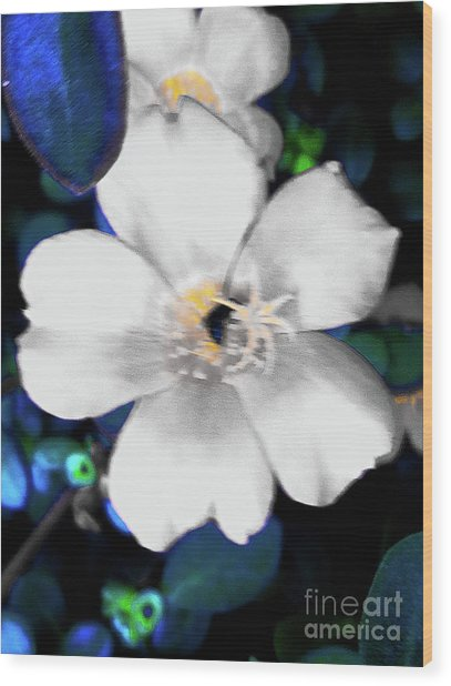 Bright Blue Accents White Vinca Wood Print