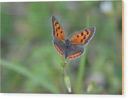 Bright Copper Wood Print