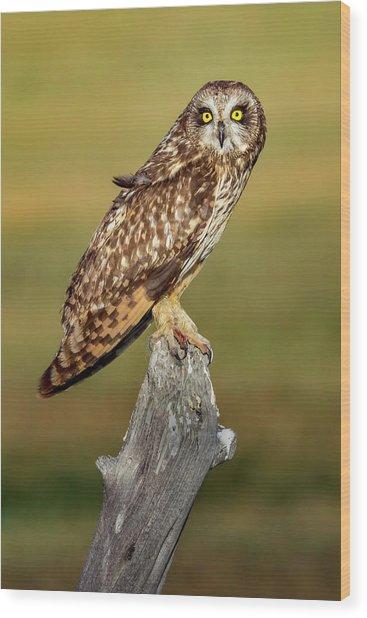 Bright-eyed Owl Wood Print