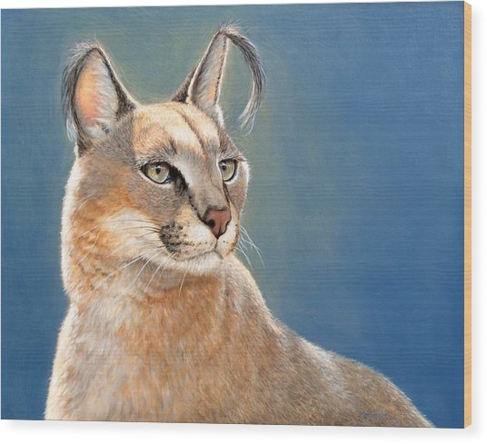 Bright Eyes - Caracal Wood Print