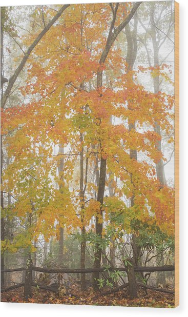Bright Fall Wood Print by Sallie Woodring