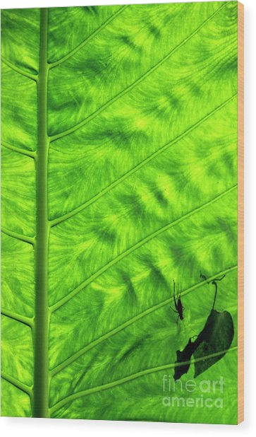 Bright Green Leave With An Insect Crawling Over Its Surface Wood Print by Sami Sarkis