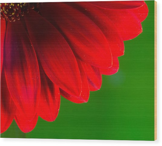 Bright Red Chrysanthemum Flower Petals And Stamen Wood Print