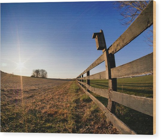 Wood Print featuring the photograph Bright Sky by Ryan Shapiro