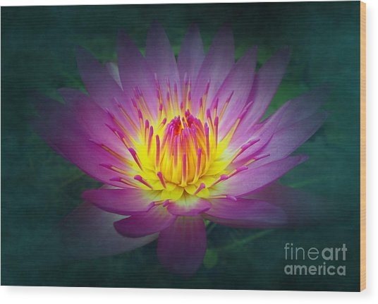 Brightly Glowing Lotus Flower Wood Print