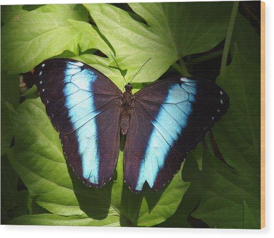 Brillant Blue Butterfly Wood Print by Nicole I Hamilton