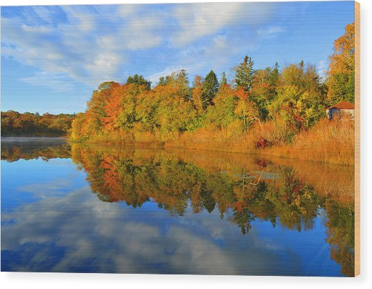 Brilliance Of Autumn Wood Print