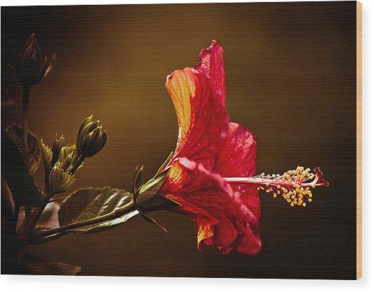 Brilliant Hibiscus Wood Print