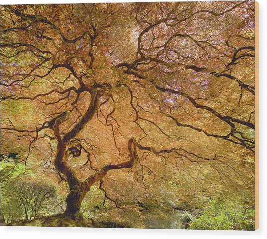 Brilliant Japanese Maple Wood Print