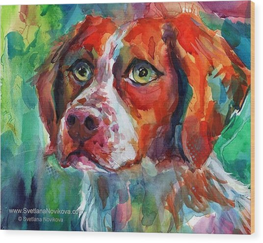 Brittany Spaniel Watercolor Portrait By Wood Print
